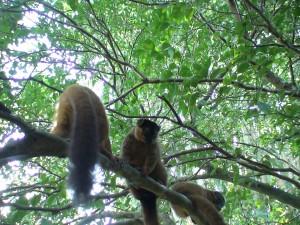 Madagaskar (5)
