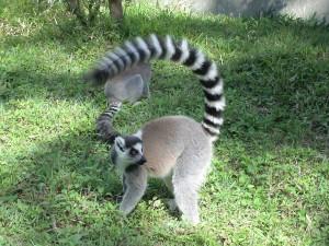 Madagaskar (6)