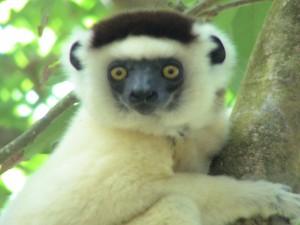 Madagaskar (7)